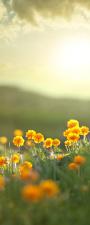 """Türtapete """"Blumen"""", Türposter,..."""