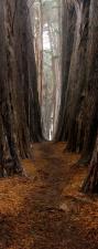 """Türtapete """"Düsterer Waldweg"""", Türposter, selbstklebend 2050 x 880 mm"""