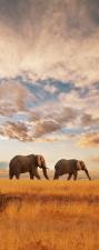"""Türtapete """"Elefanten"""", Türposter, selbstklebend 2050 x 880 mm"""