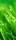 """Türtapete """"Morgentau, Tautropfen, Gras"""", Türposter, selbstklebend 2050 x 880 mm"""