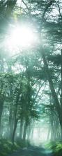 Türtapete Wald Bäume Sonnenstrahl, Türposter, selbstklebend 2050 x 880 mm