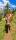 "Türtapete ""Kuh, Alpen, Weg"", Türposter, selbstklebend 2050 x 880 mm"