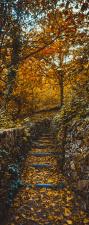 Türtapete Herbst Wald Weg Türposter Fototapete selbstklebend 2050 x 880 mm
