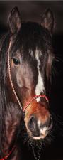 Türtapete Türposter Türfolie Pferd braunes...
