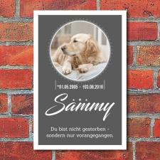 Grabschild Gedenktafel Gedenkschild Katze Hund Tier mit...